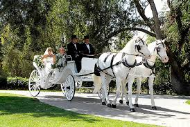 san diego wedding transportation services rental